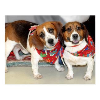 Foto de los beagles del refugio postal