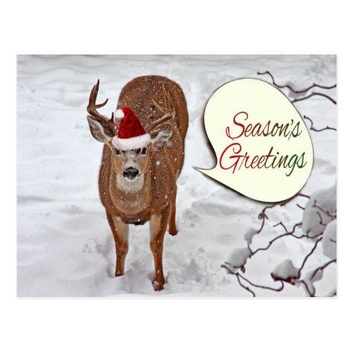 Foto de los ciervos de Santa Tarjetas Postales