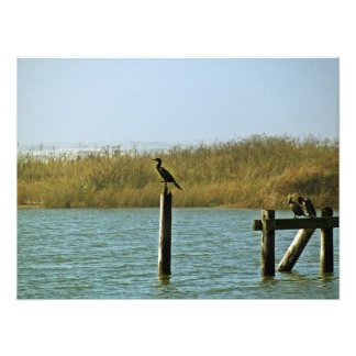 foto de los cormoranes