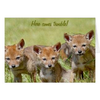 Foto de los coyotes del bebé tarjeta de felicitación
