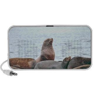Foto de los leones marinos altavoz de viajar