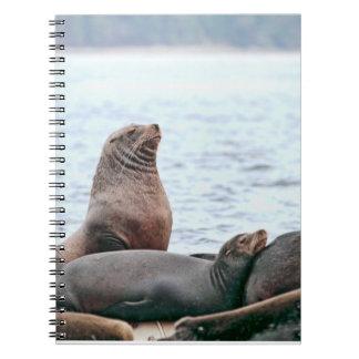 Foto de los leones marinos libro de apuntes con espiral
