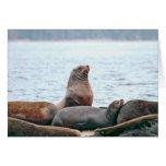 Foto de los leones marinos tarjeta de felicitación