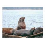 Foto de los leones marinos tarjeta postal