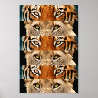 Foto de los ojos del tigre y del león póster