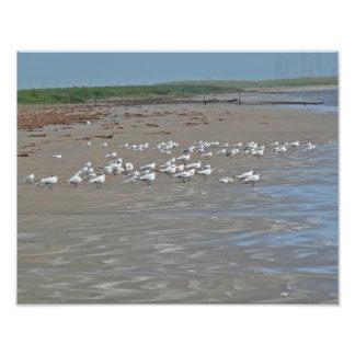 Foto de los pájaros de orilla