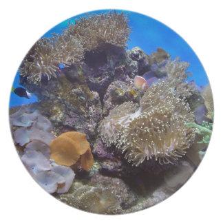 Foto de los pescados del acuario