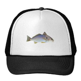 Foto de los pescados del punto gorros bordados