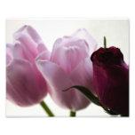 Foto de los tulipanes 3258