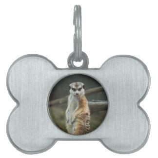 Foto de Meerkat Placas De Nombre De Mascota