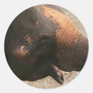 Foto de risa feliz del elefante en Tailandia Pegatina Redonda