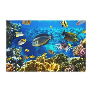 Foto de un pescado tropical en un arrecife de cora lona estirada galerías
