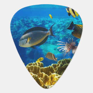Foto de un pescado tropical en un arrecife de cora plumilla de guitarra