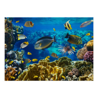Foto de un pescado tropical en un arrecife de cora póster
