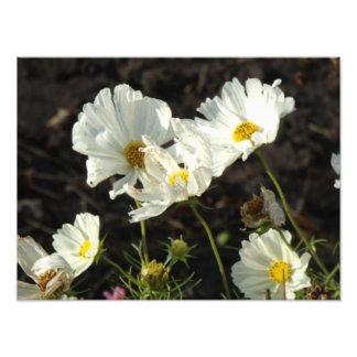 Foto de una cama de flor del blanco y de las cojinete