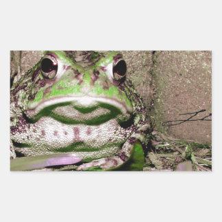 Foto de una rana gorda funnycolorful del sapo pegatina rectangular