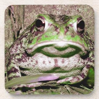 Foto de una rana gorda funnycolorful del sapo posavasos de bebida