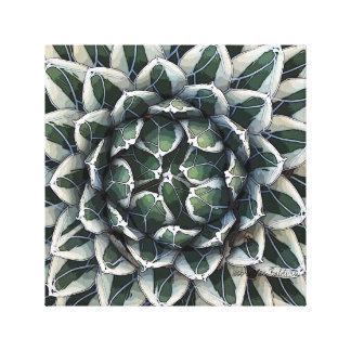 Foto de Victoria-reginae del agavo de Debra Lee Lona Envuelta Para Galerías