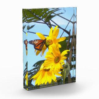 Foto del acrílico del girasol de la mariposa N