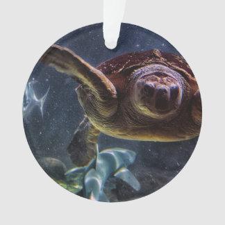 Foto del acuario de la tortuga de mar