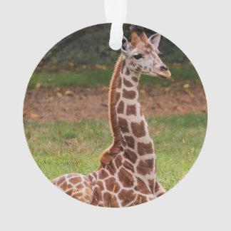 Foto del animal de la fauna de la jirafa