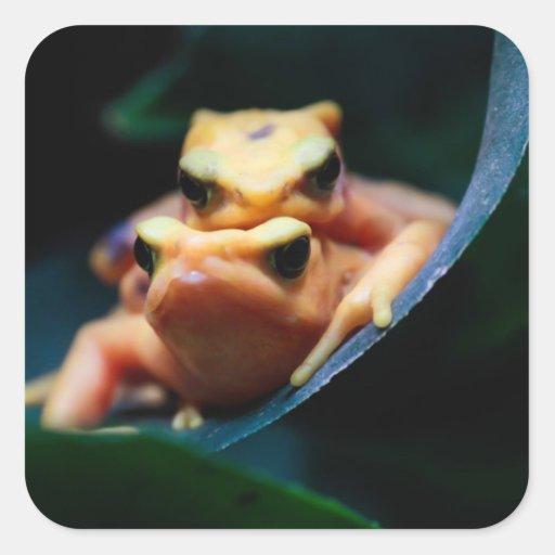 Foto del animal de la fauna de las ranas del dardo colcomanias cuadradases