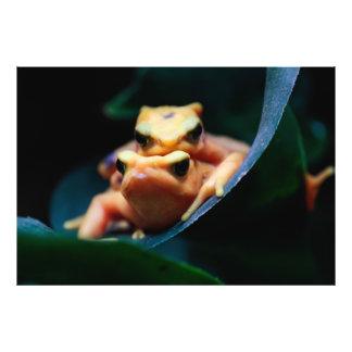 Foto del animal de la fauna de las ranas del dardo