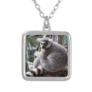 Foto del animal de la fauna del Lemur de la cola Colgante Personalizado