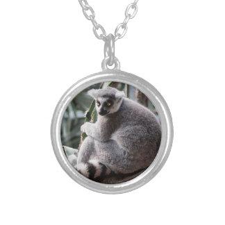 Foto del animal de la fauna del Lemur de la cola Collar Personalizado
