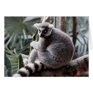 Foto del animal de la fauna del Lemur de la cola Tarjeta De Felicitación