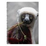 Foto del animal de la fauna del Lemur de Sefaka Libro De Apuntes