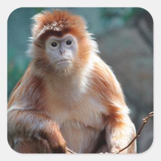 Foto del animal de la fauna del mono del Langur Pegatina Cuadrada