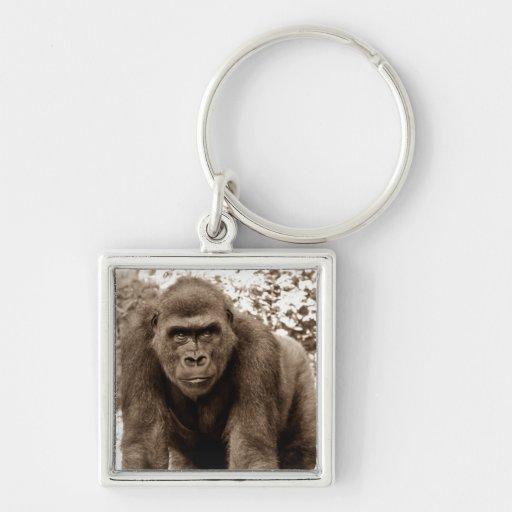Foto del animal de la fauna del primate del mono d llaveros personalizados