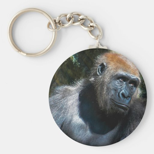 Foto del animal de la fauna del primate del mono d llavero personalizado