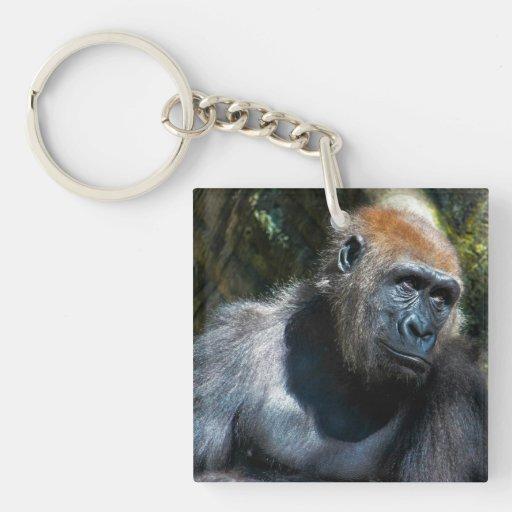 Foto del animal de la fauna del primate del mono d llaveros