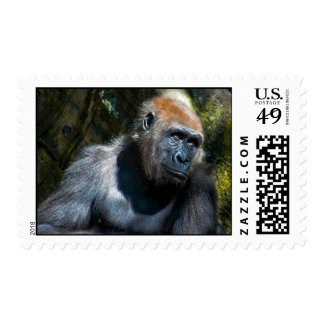 Foto del animal de la fauna del primate del mono d sello
