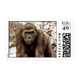 Foto del animal de la fauna del primate del mono d franqueo