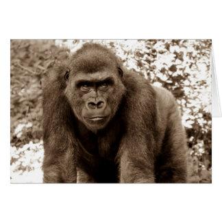 Foto del animal de la fauna del primate del mono d tarjetón