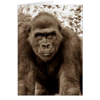 Foto del animal de la fauna del primate del mono d tarjetas