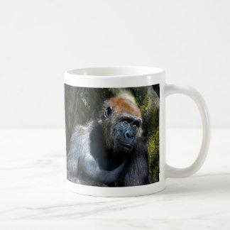 Foto del animal de la fauna del primate del mono d tazas