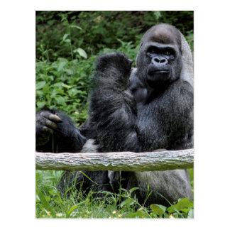 Foto del animal de la fauna del primate del mono postal