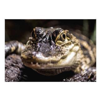 Foto del animal del reptil de la fauna del cocodri