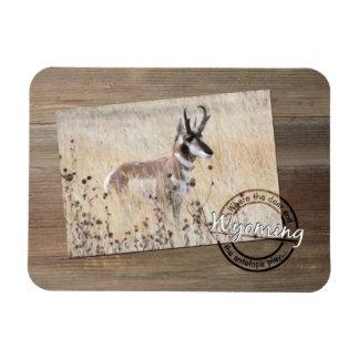 Foto del antílope de Pronghorn en la madera - Imán