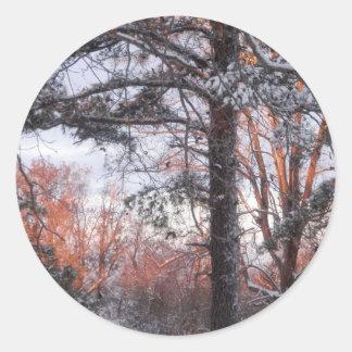 Foto del árbol de pino de la nieve del invierno de pegatina redonda