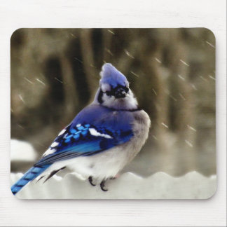 Foto del arrendajo azul mouse pads