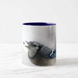 Foto del arrendajo azul taza de café de dos colores