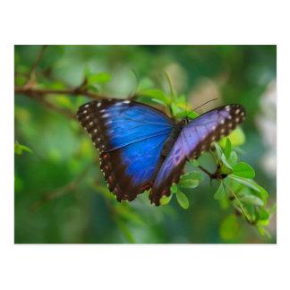 Foto del Auf de Foto de la mariposa Postal