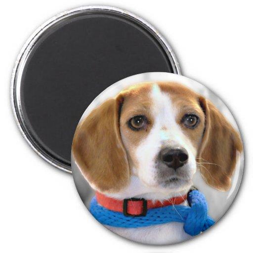 Foto del beagle del refugio imán redondo 5 cm