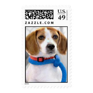 Foto del beagle del refugio envio