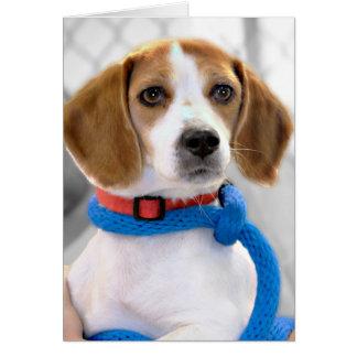 Foto del beagle del refugio